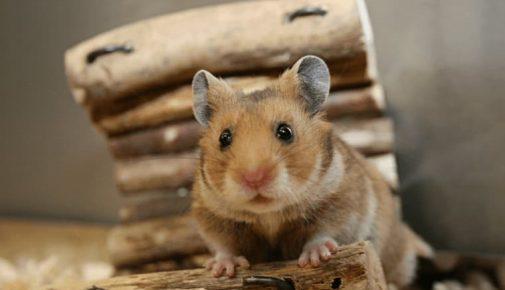 Hamster beschäftigen