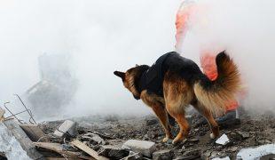 Vermisstensuchhund
