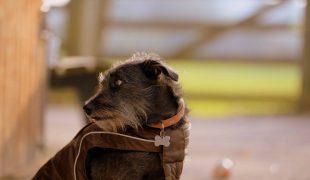 Hund im Mantel