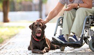 Ergotherapiehund