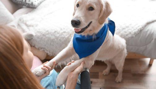 epilepsiewarnhund