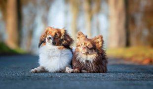Coronazeit mit Hund