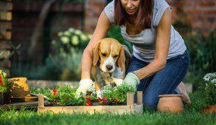 Beetplanung mit Hund