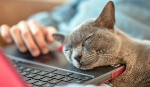 Katzenverhaltensberatung mit Kontaktverbot