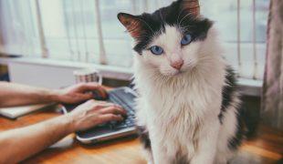 Corona mit Katze