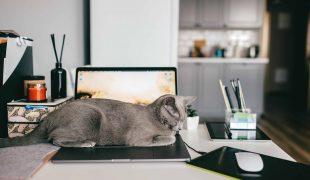 Homeoffice mit Katze