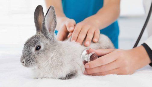 Narkose beim Kaninchen