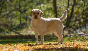 Alterungsprozess bei Hunden