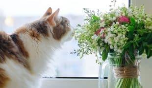 Giftige Zimmerpflanzen für Katzen