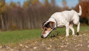 Artenschutzhund