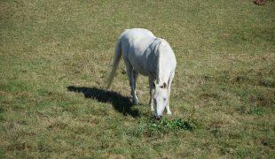 Pferdeweide richtig pflegen