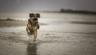 Wasservergiftung beim Hund