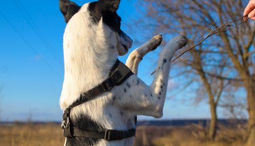 Feinmotoriktraining für Hunde