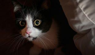 Katze fremdelt