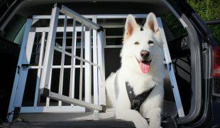 Hund an Transportbox und Hunderampe gewöhnen
