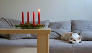 Adventszeit mit Haustier