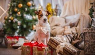 Tiere als Weihnachtsgeschenk
