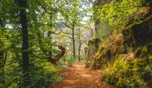 Schluchtensteig im Naturpark Südschwarzwald
