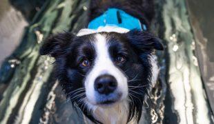 Hydrotherapie für Hunde
