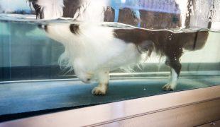 Unterwasserlaufband für Hunde