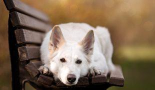 Hundetraining Kopf ablegen