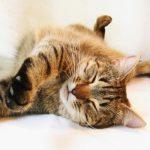 Paarungsverhalten von Katzen: Wie Sie richtig damit umgehen