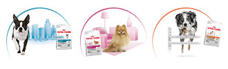 Royal Canin Lifestyle Health Nutrition entdecken bei ZooRoyal